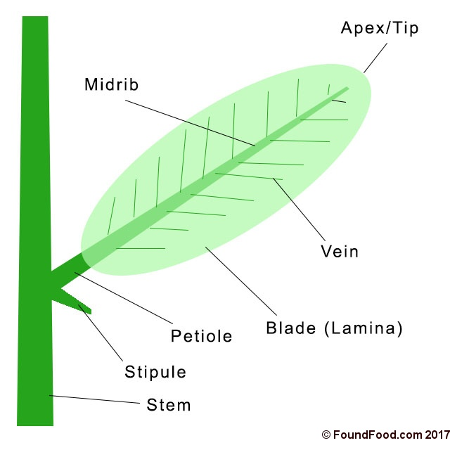 Structure and Parts of a Leaf